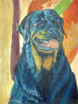Blackie, Dog Portrait